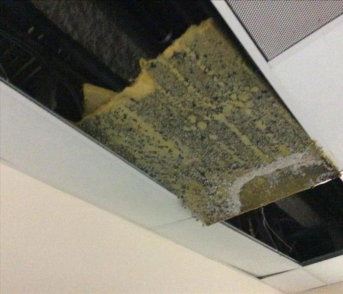 Mold damage in St. Louis