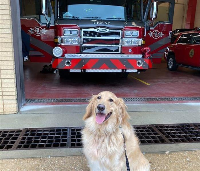 dog in front of fire truck.