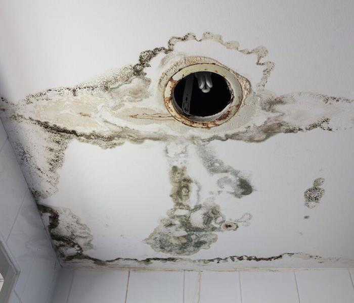 Mold Damage – Shrewsberry Office building