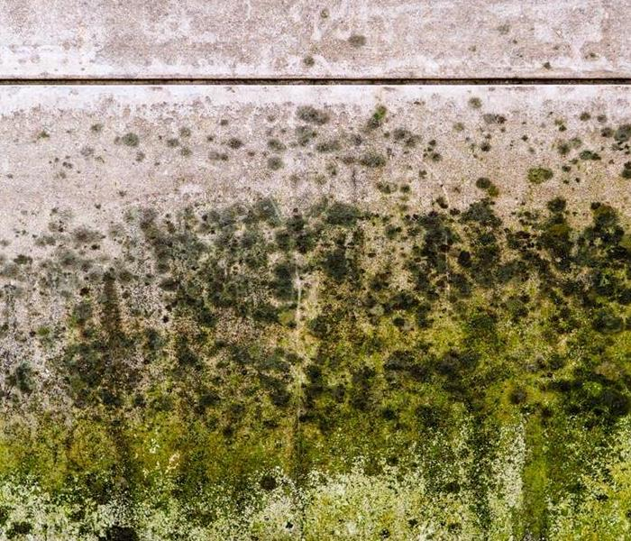 If There Are 100,000 Types Of Mold, Which Type Is
