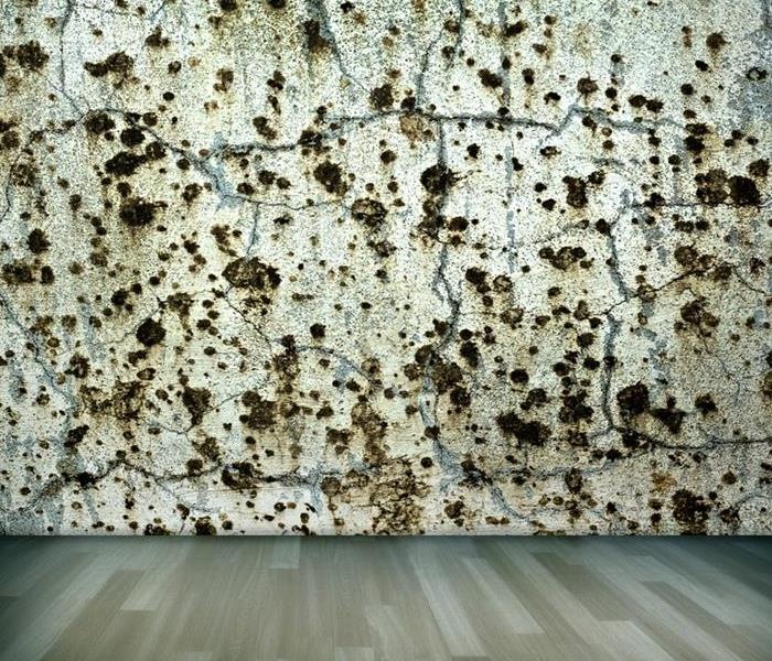 Commercial The 6-Point Cheat Sheet to Commercial Mold
